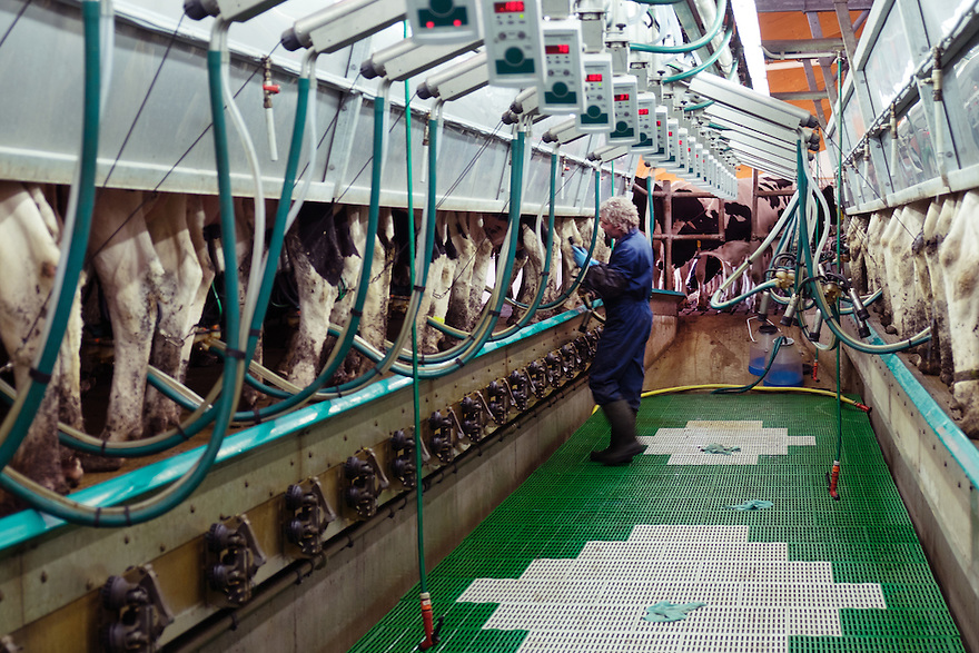 Nederland, Zwartsluis, 2 mei 2015<br /> Natuurboerderij Weidevol. Biologisch melkveebedrijf. <br /> Nieuwe moderne melkstal.<br /> <br /> Foto: Michiel Wijnbergh