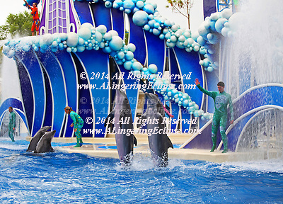 Dawn Brancheau trainer/ performer was killed at a live show February 24, 2010 by a killer whale Tilikum.