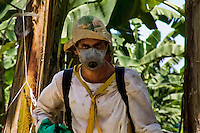 A Costa Rican worker during the aplication of chemicals used for maintenance of plants on the banana plantation near Puerto Limon, Costa Rica, 2 September 2004. Eighty percent of the exported bananas in the world are grown in Latin America. Local farms have no other alternative than to sell for a price offered by the multinational company. When working conditions and ecology is in question, the corporations do not have any responsibility as they do not own plantations. Local governments in the attempt of organizing banana export provide low duty taxes on export, they try to eliminate social and enviromental politics to attract the big companies to their countries.