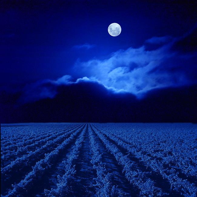 A moon shines over vineyard