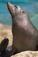 Seal basking in sun, Able Tasman National Park, New Zealand