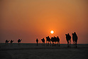 General view,..JANUARY 23, 2011 - Football :..A herd of camels walk in the desert at sunset during the AFC Asian Cup Qatar 2011 in Doha, Qatar. (Photo by Jinten Sawada/AFLO)
