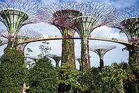 Tree-like structures called Supertrees dominate the 'Gardens by the Bay' landscape with heights of up to 50 metres. These vertical gardens perform a multitude of functions, which include planting, shading and working as environmental engines for the gardens. Fitted with environmental technologies that mimic the ecological function of trees &ndash; photovoltaic cells that harness solar energy which can be used for some of the functions of the Supertrees, such as lighting (mimicking photosynthesis in nature); and collection of rainwater for use in irrigation and fountain displays, (mimicking rainwater absorption for growth in nature). The Supertrees also serve air intake and exhaust functions as part of the conservatories' cooling systems.<br /> Gardens by the Bay is an integral part of a strategy by the Singapore government to transform Singapore from a &quot;Garden City&quot; to a &quot;City in a Garden&quot;. The stated aim is to raise the quality of life by enhancing greenery and flora in the city. Photo by Suzanne Lee/Panos Pictures
