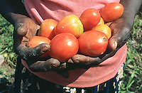 Uganda. Kayunga district. Nnongo. The farmer Florence Badaaza holds in her hands fresh red tomatoes which she just has plucked in her garden.© 2004 Didier Ruef