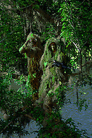 United States Army snipers in camouflage in trees Chattanooga River,  in Georgia