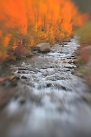 Bishop Creek - South Lake - Fall Color - Lensbaby