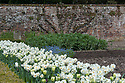 Tulip 'Spring Green' and white narcissus in the Walled Garden, Hinton Ampner, Hampshire, late April.
