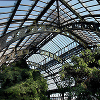 Plant History Glasshouse (formerly Australian Glasshouse), 1830s, Rohault de Fleury, Jardin des Plantes, Museum National d'Histoire Naturelle, Paris, France. High angle view of the interior of the glasshouse showing the glass and metal roof structure and the luxuriant Tropical vegetation lit by the afternoon sun. At the left of the picture a Podocarpus Elongata plant from South West Africa is growing.