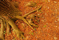 Beautiful nature photos of forest floor with huge tree roots. Landscape fine art photography by Paul Chong.