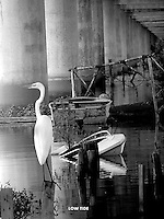 life under the bridge,EGRETS,under the interstate