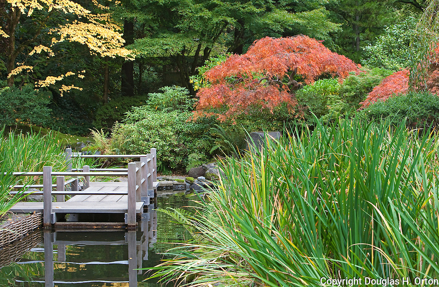 Bridge on pond portland oregon japanese garden for Portland japanese garden koi