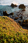 As waves crash on the rocky beach below, the last bit of sunshine highlights the green flowers growing along the cliffs over the Pacific.