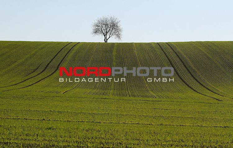 17.10.2013., Koprivnica - 30 acres of plowed land   reminiscent of the Windows XP Wallpaper.<br /> Photo: Marijan Susenj/PIXSELL