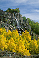 A spring fed waterfall which drains into BISHOP CREEK is surrounded by golden QUAKING ASPENS - SIERRA NEVADA, CALIFORNIA