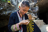 Ethnic Black Hmong tribe girl embroidering traditional clothing, Northern Vietnam