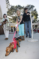 Members of the San Diego Dachshund Club and their dogs  parade across the stage at the Spreckels Organ in Balboa Park, San Diego California, December 23rd, 2007.