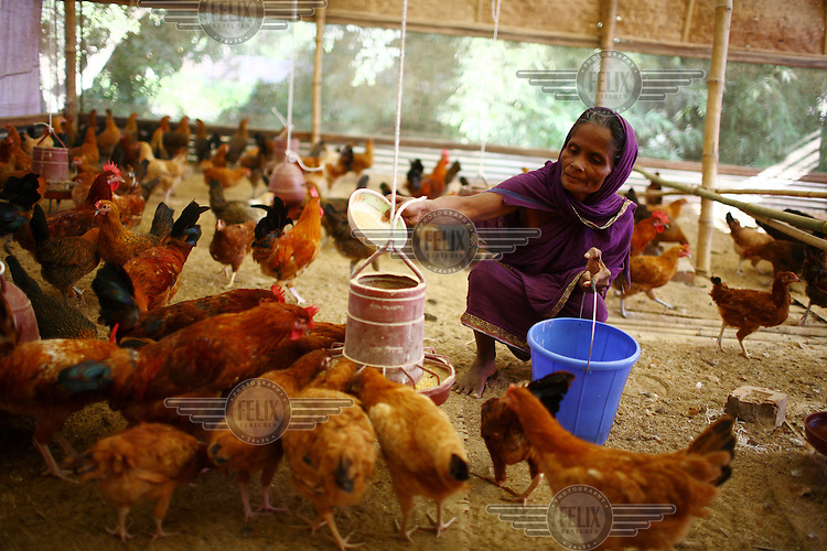 55 year old Saleya Begum at her chicken farm in Ujan Dhaki. She participated in an IFAD (International Fund for Agricultural Development) training programme on proper chicken vaccination techniques and received a microfinance loan.