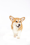 20140904 Judi Happy Dog Full Body