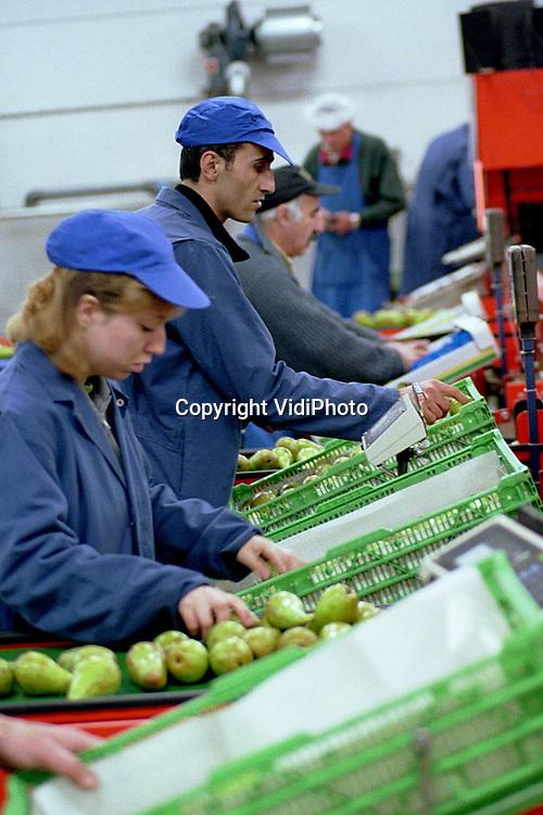 Foto: VidiPhoto..OCHTEN - De stemming op het (fruit)pak- en sorteerstation van de fruitveiling van Fruimasters  in Ochten is niet best. Het personeel heeft te horen gekregen dat de afdeling gesloten wordt en de werkzaamheden worden verplaatst naar de hoofdvestiging in Geldermalsen. Er vallen geen ontslagen, maar het personeel is woest. Ze vrezen dat dit het begin is van de sluiting van de Ochtense vestiging. Volgens Fruitmasters draait het Ochtense pakstation een verlies van meer dan een half miljoen per jaar. Donderdagavond wordt er tijdens de ledenvergadering het nodige 'vuurwerk' verwacht.