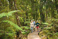 Family of tourists on  boarded walk through  bogs and native forest at Ship Creek, West Coast, South Westland, UNESCO World Heritage Area, New Zealand, NZ