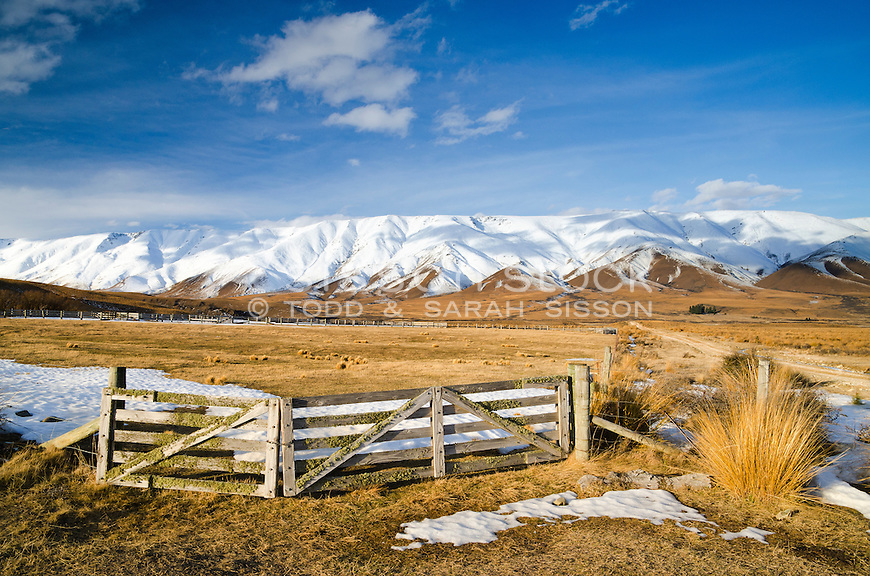 Farm gates and tussock with snow covered Hawkduns behind, Central Otago, New Zealand - stock photo, canvas, fine art print