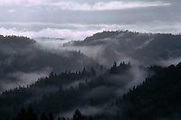 Coastal fog hugs the mountainous forests making a typical landscape scene in Humboldt County in northern California.