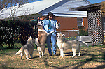 Siberian Huskys in the yard<br />