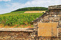 Vineyard. Domaine Bonneau du Martray, Corton Charlemagne. Aloxe Corton, Cote de Beaune, d'Or, Burgundy, France