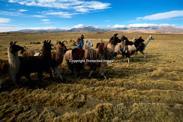 Llama salt caravan, Empires of the Sun; Bolivia; Lake Titicaca; Tiwanaku