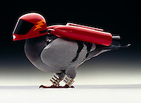 Turbo fueled carrier pigeon.