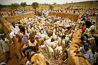 Hundreds of people came to have their goats vaccinated during an event sponsored by CARE in a UNHCR camp for Darfur refugees near Iriba, in eastern Chad.