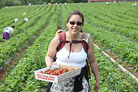 Chiles Orchard strawberry picking in Albemarle County, Va. Photo/Andrew Shurtleff
