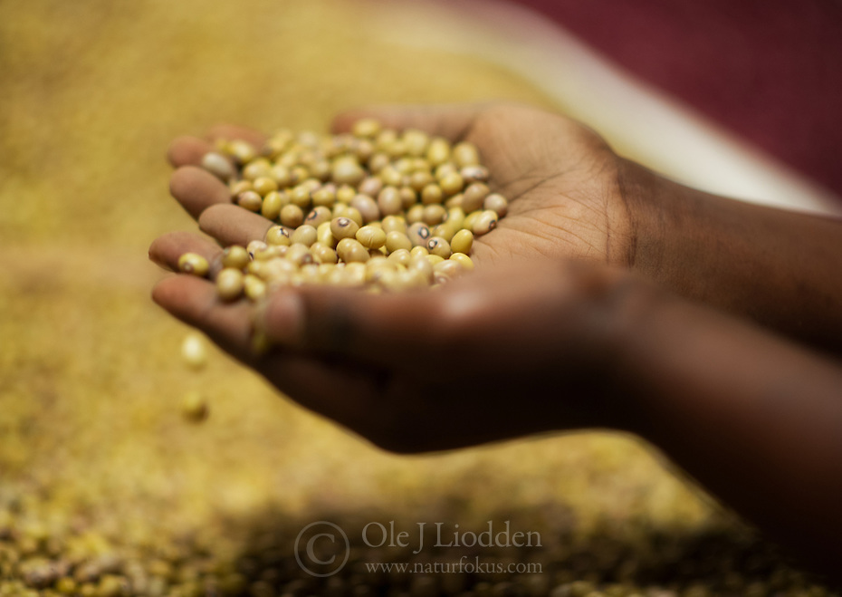 Hands with beans on a local market, Kigali, Rwanda