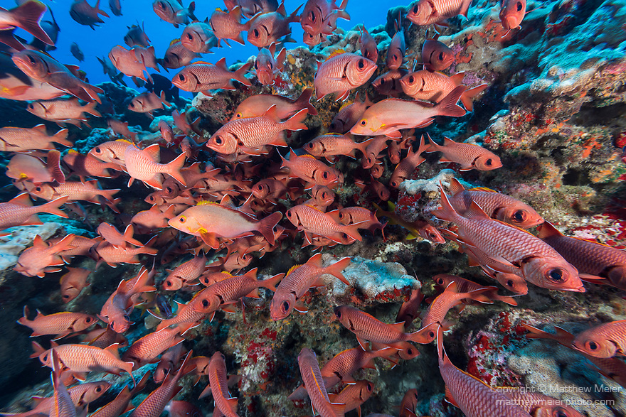 Toau Atoll, Tuamotu Archipelago, French Polynesia; an aggregation of big-scale soldierfish and humpback snapper hiding in a rocky cavern during the day