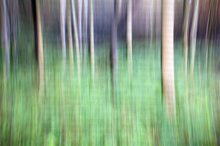 Abstract Autumn Trees in Strid Wood Bolton Abbey North Yorkshire England