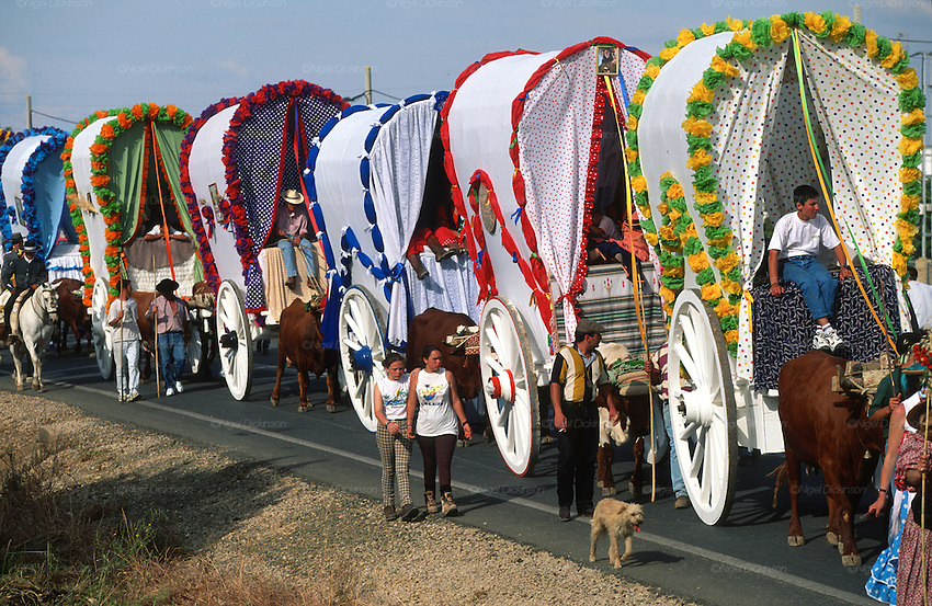 "The pilgrim route of the Hermandad de Triana de Sevilla to El Rocio, Huelva Province, Andalusia, Spain...El Rocio follows on from Semana Santa - Easter week and the various spring ferias, of which Seville's Feria de Abril (April) is the biggest. The processions to the (Hermitage) Hermita de El Rocío, at Pentecost, is the most famous (Romeria) pilgrimage in the Andalusian region, attracting nearly a million people from across Andalusia, Spain and the world. The cult started off in the 13th century when a statue of the virgin Mary was apparently found in a tree trunk in the Donana Park. What was first a local devotion at Pentecost by local pilgrim brotherhoods ""hermandades"" became by the 19th century into dozens of fraternities developed from such as Cadiz, Selville and Huelva. Some walk for several days, others travel with oxen drawn wagons or on horseback, with traction engines and all terrain vehicles, camping along the trail they take. They wear Andalusian costumes, tight breeches, boots, short jackets and frilly flamenco skirts. Many festivities, flamenco dance, laments, songs and music are combined with religious prayers. Devout pilgrims walk as a penance, keeping vows of silence. An emblem of the immaculate conception (sin peche) is carried. On the Pentecost after the stroke of midnight on the whit Sunday the virgin Mary is carried from the church through the streets of El Rocio by each hermandade to visit each brotherhood's shrine."