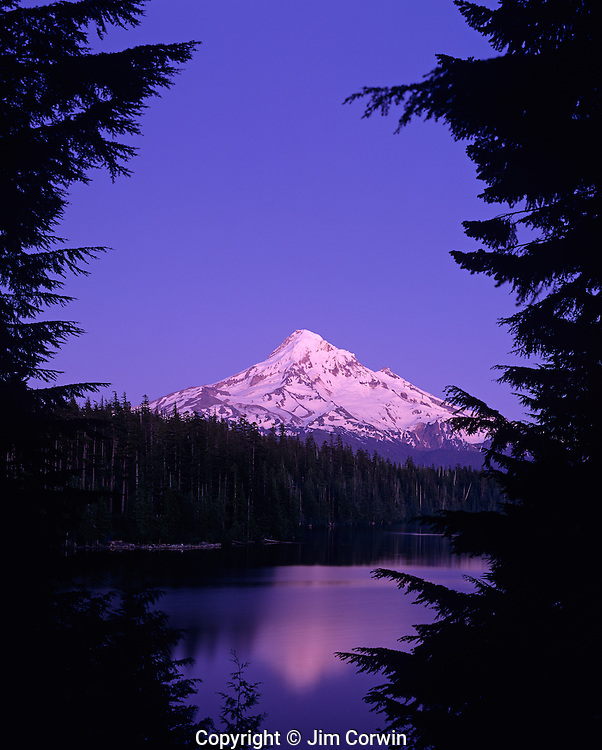 Mount Hood reflected in small mountain lake Lost lake sunset with pinkish colors at twilight Oregon State USA