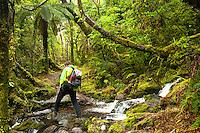 Hiker on track through juicy green, native temperate rainforest with stream near Franz Josef Glacier, Westland Tai Poutini National Park, UNESCO World Heritage Area, West Coast, New Zealand, NZ