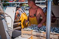 Lifestyles - Fishmongers