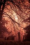 Misty view across a churchyard in Eye Suffolk England