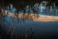 Standing water in a wetland reflects the trees along the far shore and sunset painted clouds from overhead.