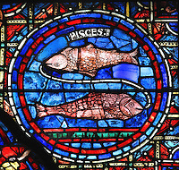 Pisces, with 2 fish placed head to tail, joined at the mouths by a wire according to custom, from the Zodiac and the labours of the months stained glass window, 1217, in the ambulatory of Chartres Cathedral, Eure-et-Loir, France. This calendar window contains scenes showing the zodiacal symbol with its corresponding monthly activity. Chartres cathedral was built 1194-1250 and is a fine example of Gothic architecture. Most of its windows date from 1205-40 although a few earlier 12th century examples are also intact. It was declared a UNESCO World Heritage Site in 1979. Picture by Manuel Cohen