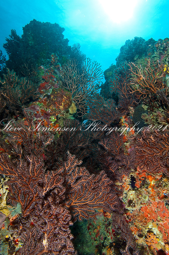 Reef Scenic with gorgonians<br /> Congo Cay <br /> U.S.Virgin Islands