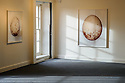 Kendal, UK. 12.11.2015. Artist, Uta Kogelsberger's, New Expressions 3 'New Opportunities Award' exhibition at Abbot Hall Art Gallery, Kendal. Supported by Arts Council England, and Lakeside Arts, the work is inspired by the story of the last Golden Eagle living in the UK. Photograph © Jane Hobson.