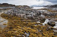 Rocky coastline at low tide, Lofoten Islands, Norway