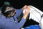 Marilyn Spalding Working On Whooping Crane Injury