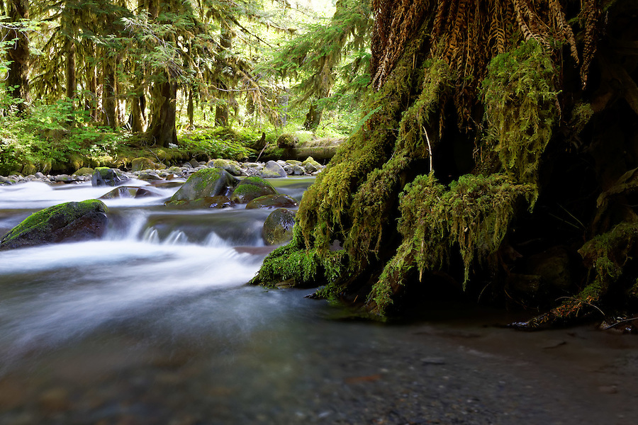 Lillian Creek, Olympic National Park, Washington