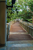 El Yunque, National, Rain  Forest, Puerto Rico; USA, Information Center, Architectural, Bridge, Walkway; Caribbean; Island; Greater Antilles; Commonwealth Puerto Rico