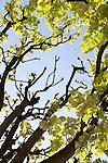 Trees in Notre Dame Park in Spring, Paris, France