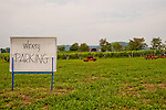 Philip Carter Winery's parking area opens onto a neat lawn with views of vineyards and the hills beyond.